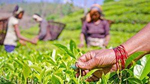 नेपाली चियाले व्यापार चिह्न त पायो, कार्यान्वयनमा समस्या