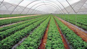 पूर्वाधार विकास कार्यक्रम : सडक र कृषिलाई प्राथमिकता